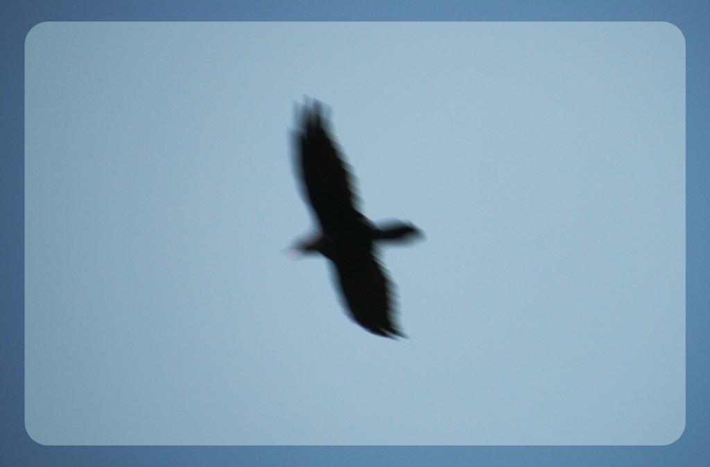 mystery-bird