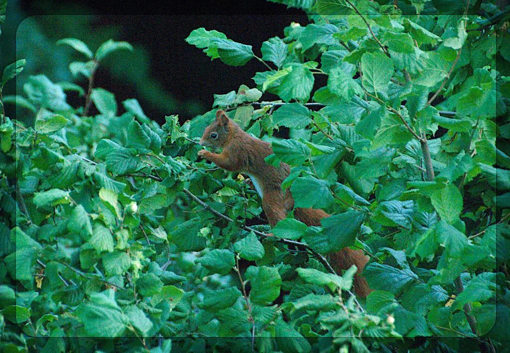 squirrel125