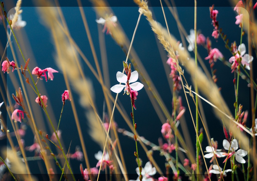 flowerpf