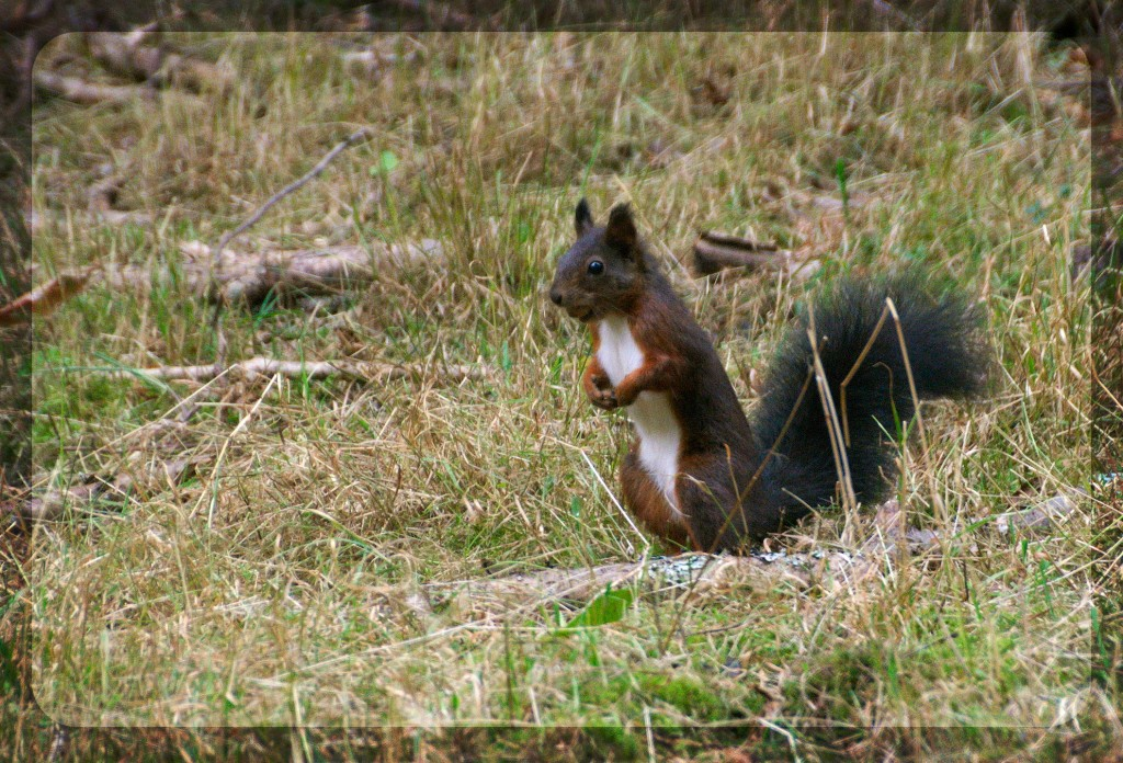 squirrelone
