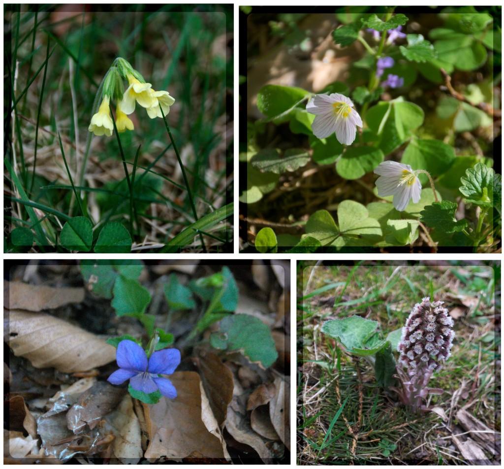 wildflowers4c