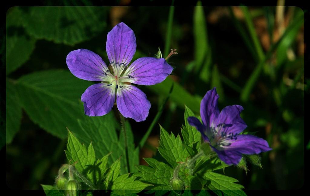 wildflowers6